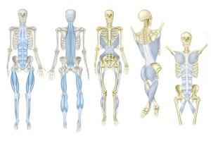"""Упражнение с лентой CLX на основе """"анатомических поездов"""""""