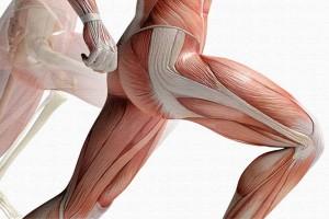 Эксцентрическое упражнение для укрепления приводящих и концентрическое для отводящих мышц бедра